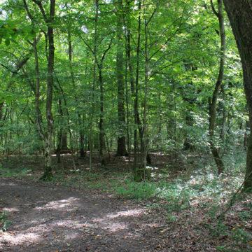 Pădurea Bistra, o oază de natură arhaică în jungla metropolitană